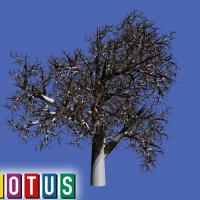 LOTUS Simulator: 3D drveće